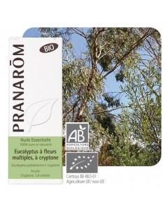 PRANAROM Huile essentielle d'Eucalyptus à cryptone BIO