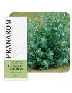 PRANAROM Huile essentielle d'Eucalyptus globuleux
